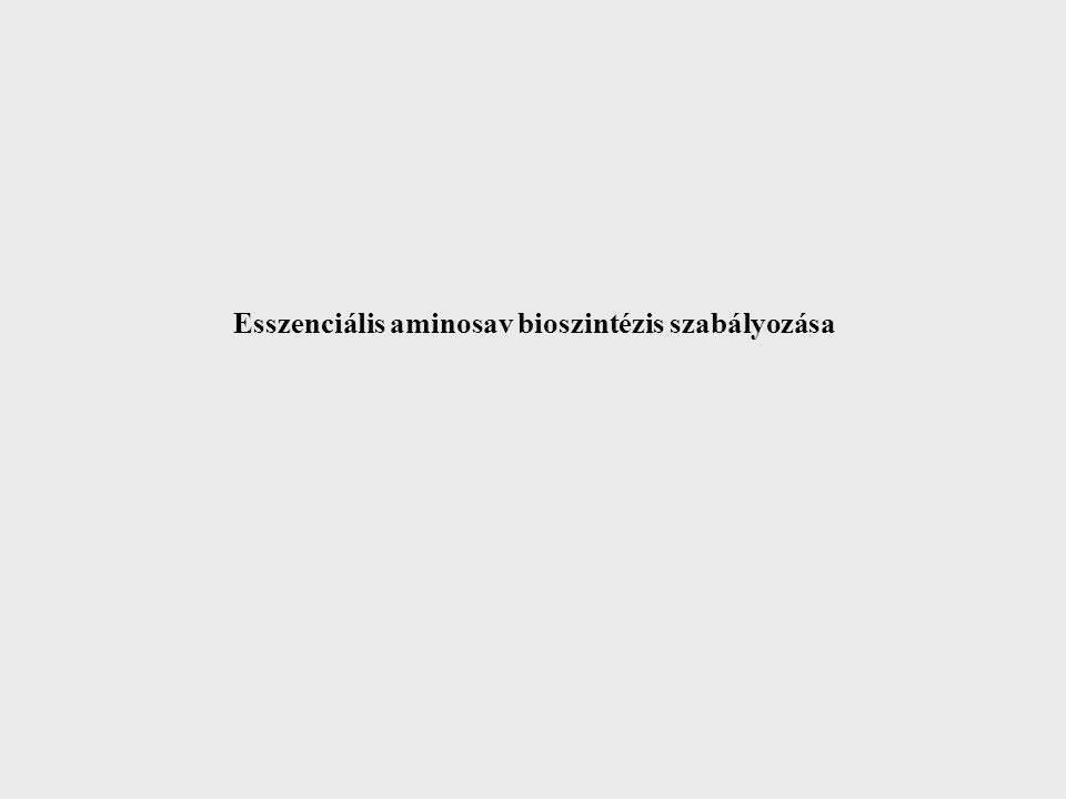 Az aminosavak transzportja Bél lumen Aminosavak Peptidek Fehérjék TS AP Aminopeptidáz Citoszol Di- és tripeptid peptidézok Diffuzió transzport Portális vér TS: Na + függő transzport rendszerek Máj Abszorpció lényegtelen, de immunválaszhoz elégséges Hartnup betegség Gyulladások, ferőzések Felszívódási zavarok tumorok