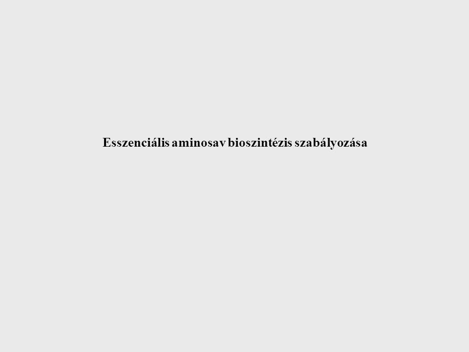 COOH C – NH 2 CH 2 H H3CH3CC5C5 S+S+ COOH C – NH 2 CH 2 H S COOH C – NH 2 CH 2 H CH 3 S COOH C – NH 2 CH 2 H SH R A Methionine-adenosyl - transferase ATP Pi PPi Pi S-Adenosyl homocystein - methyl transferase CH 3 Acceptors S-Adenosyl methionine Activated-methyl cycle Met CH 3 N 5 – methyl – THF Homocysteine - methyltransferase (Vit B 12 ) Adenosyl S-Adenosyl-homocysteine H2OH2O Adenosyl Homocysteine diet