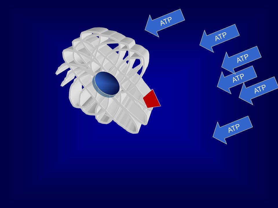 Allosztérikus hatáskismolekulatömegű intermedierekkel Példa: glikolízis glukóz Tejsav Legfontosabb szabályozott enzim: Foszfofruktokináz (FFK) Fr-6P + ATP →fr-1,6P 2 + ADP [ATP] v + AMP + citrát FFK ATP
