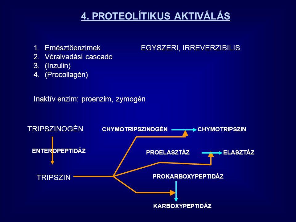 A FOSZFORILÁCIÓ-DEFOSZFORILÁCIÓ LEHETSÉGES MECHANIZMUSA P AKTÍV INAKTÍV NEM FOSZFORILÁLT FEHÉRJE FOSZFORILÁLT FEHÉRJE  G= 4.3 kcal/mol  G= 2.8 kcal/mol ATP ADP INAKTÍV P P AKTÍV defoszforilált Aktív 1 Inaktiv 1000 Aktív 100 Inaktiv 1 foszforilált = = INAKTÍV A töltéstaszítás energiája konformációváltozásra fordítódott