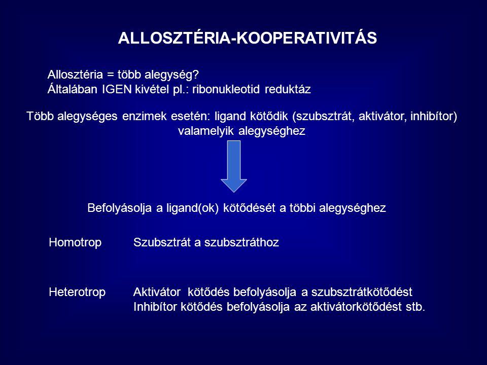 ALLOSZTÉRIA-KOOPERATIVITÁS Allosztéria = több alegység.