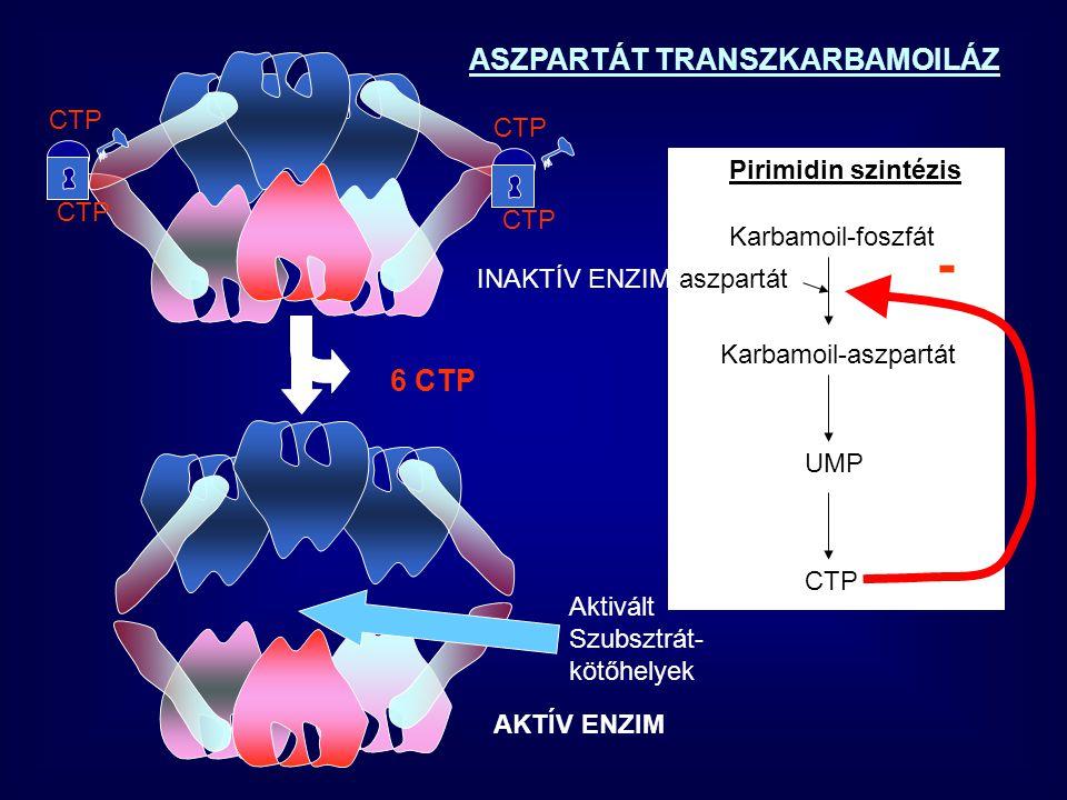 KOOPERATIVITÁS Alap: több alegységes struktúra szigmoid görbe Def: egy ligand kötődése az egyik alegységen Befolyásolja egy másik ligand kötődését a következő protomeren.