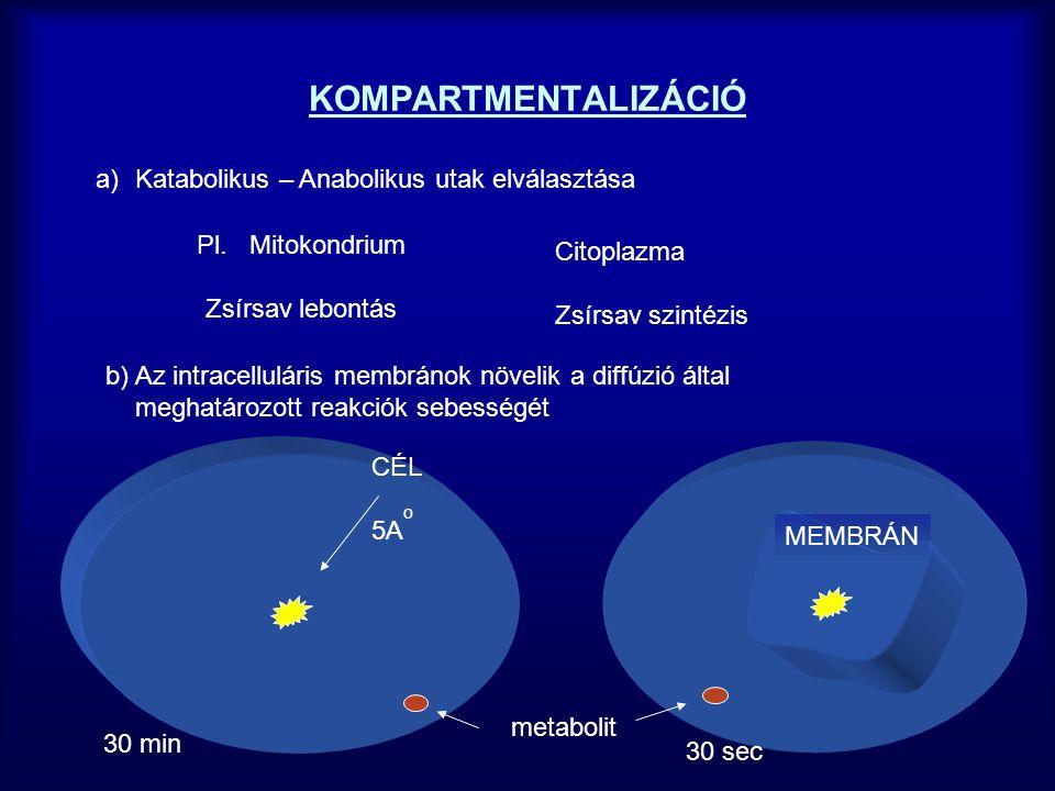 AZ ENZIMAKTIVITÁS SZABÁLYOZÁSA 1.Kompartmentalizáció 2.Az enzim mennyiségének szabályozása (génexpresszió) 3.Az enzim katalítikus aktivitásának reverzibilis szabályozása Gátlások - kompetitiv - nem kompetitív Alloszterikus modifikáció Az enzim kémiai (kovalens módosítása) 4.Proteolitikus aktiválás