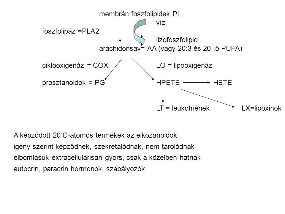 membrán foszfolipidek PL víz foszfolipáz =PLA2 lizofoszfolipid arachidonsav= AA (vagy 20:3 és 20:5 PUFA) ciklooxigenáz = COXLO = lipooxigenáz prosztanoidok = PGHPETEHETE LT = leukotriénekLX=lipoxinok A képződött 20 C-atomos termékek az eikozanoidok igény szerint képződnek, szekretálódnak, nem tárolódnak elbomlásuk extracellulárisan gyors, csak a közelben hatnak autocrin, paracrin hormonok, szabályozók