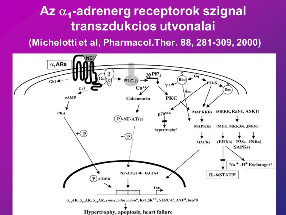 Az  1 -adrenerg receptorok szignal transzdukcios utvonalai (Michelotti et al, Pharmacol.Ther.
