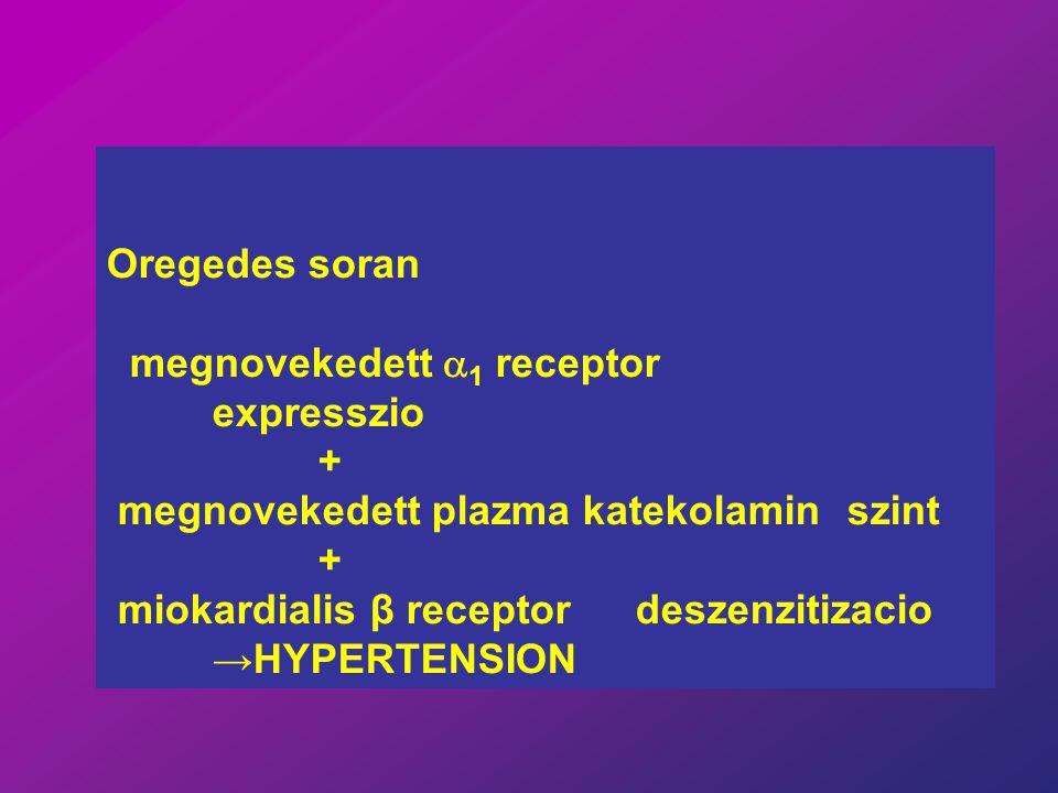Oregedes soran megnovekedett  1 receptor expresszio + megnovekedett plazma katekolamin szint + miokardialis β receptor deszenzitizacio →HYPERTENSION