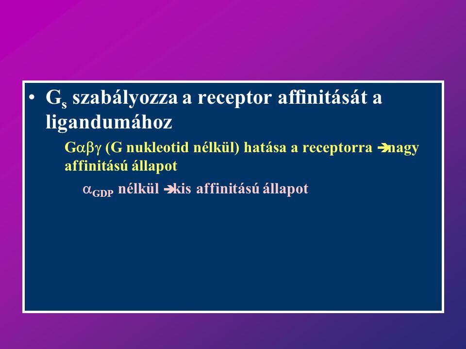 G s szabályozza a receptor affinitását a ligandumához G  (G nukleotid nélkül) hatása a receptorra  nagy affinitású állapot.