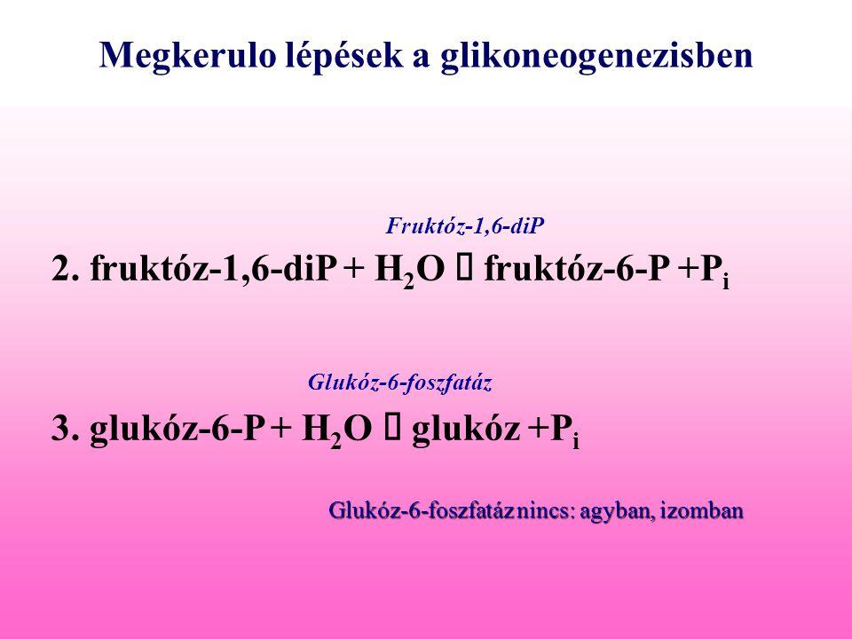Megkerulo lépések a glikoneogenezisben 2. fruktóz-1,6-diP + H 2 O  fruktóz-6-P +P i 3. glukóz-6-P + H 2 O  glukóz +P i Fruktóz-1,6-diP Glukóz-6-fosz