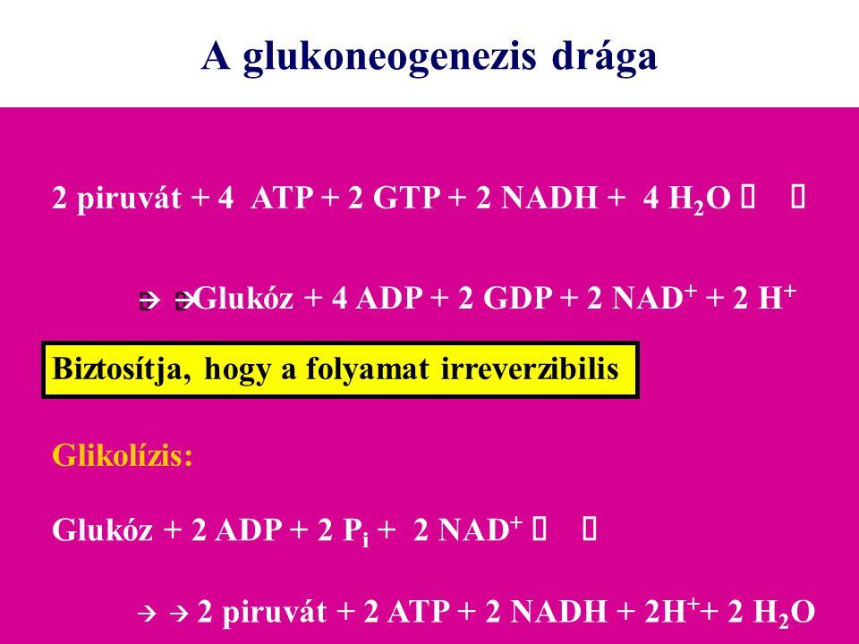 A glukoneogenezis drága 2 piruvát + 4 ATP + 2 GTP + 2 NADH + 4 H 2 O    Glukóz + 4 ADP + 2 GDP + 2 NAD + + 2 H + Glikolízis: Glukóz + 2 ADP +