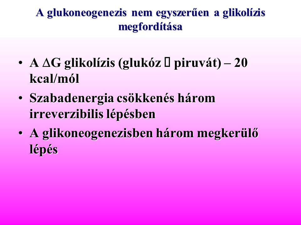 Glukoplasztikus aminosavak Piruvát –Alanin –Cisztein –Glicin –Szerin –Triptofán.