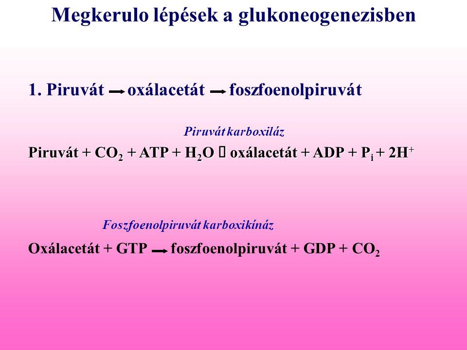 Megkerulo lépések a glukoneogenezisben Piruvát + CO 2 + ATP + H 2 O  oxálacetát + ADP + P i + 2H + Oxálacetát + GTP foszfoenolpiruvát + GDP + CO 2 Pi