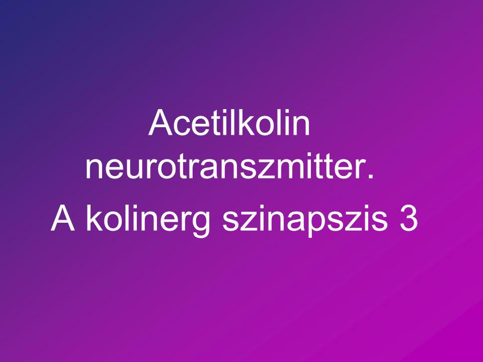 Az idegsejt két speciális tulajdonsága Elektromos jelek képzésére és vezetésére képes Speciális összeköttetéseket tud létrehozni más idegekkel, illetve a beidegzett szövetekkel  szinapszis