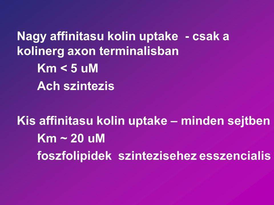 Nagy affinitasu kolin uptake - csak a kolinerg axon terminalisban Km < 5 uM Ach szintezis Kis affinitasu kolin uptake – minden sejtben Km ~ 20 uM fosz