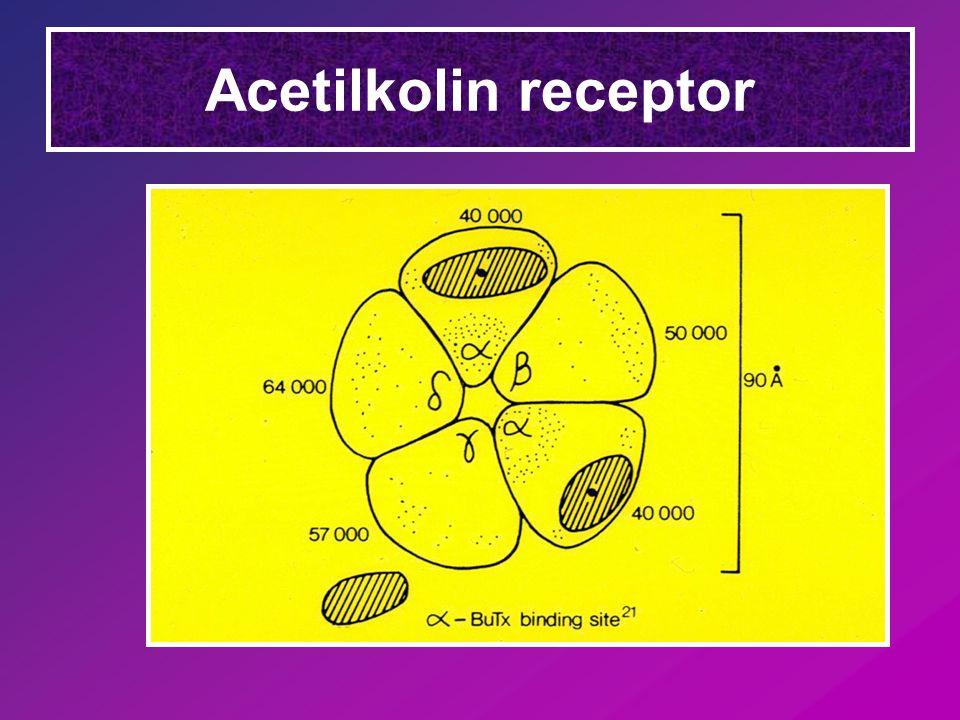 Acetilkolin receptor