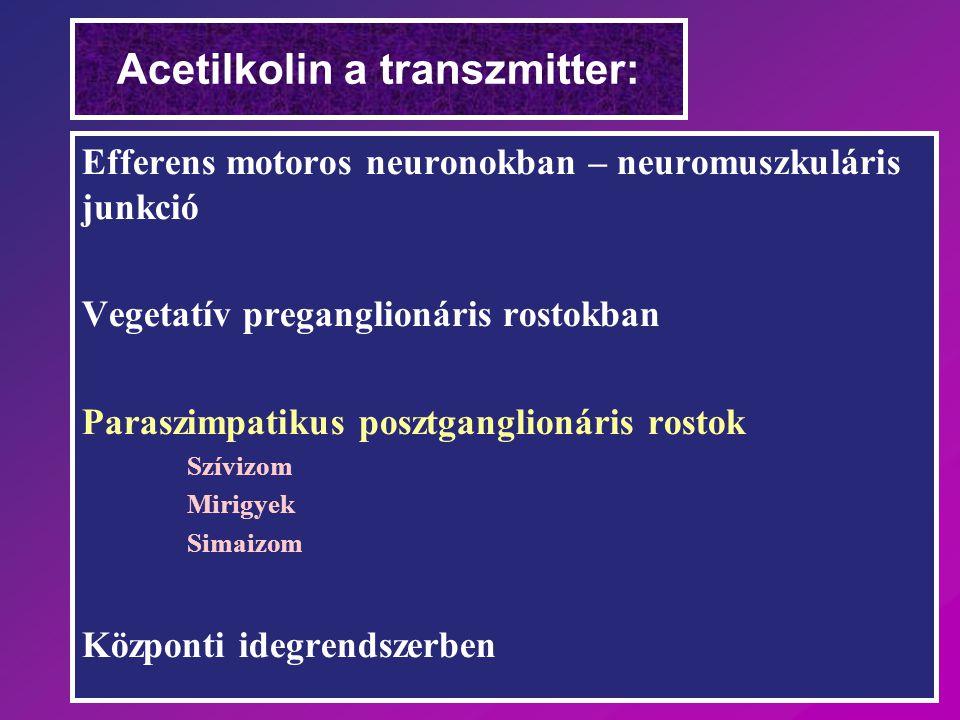 Acetilkolin a transzmitter: Efferens motoros neuronokban – neuromuszkuláris junkció Vegetatív preganglionáris rostokban Paraszimpatikus posztganglioná