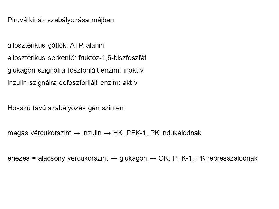 Piruvátkináz szabályozása májban: allosztérikus gátlók: ATP, alanin allosztérikus serkentő: fruktóz-1,6-biszfoszfát glukagon szignálra foszforilált en