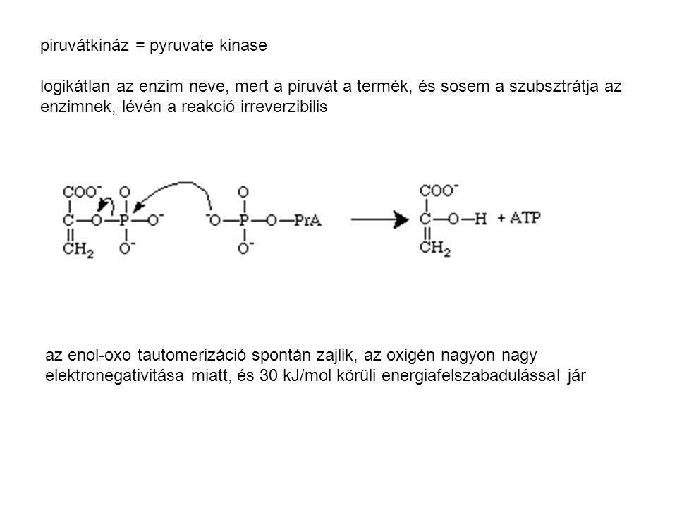 piruvátkináz = pyruvate kinase logikátlan az enzim neve, mert a piruvát a termék, és sosem a szubsztrátja az enzimnek, lévén a reakció irreverzibilis