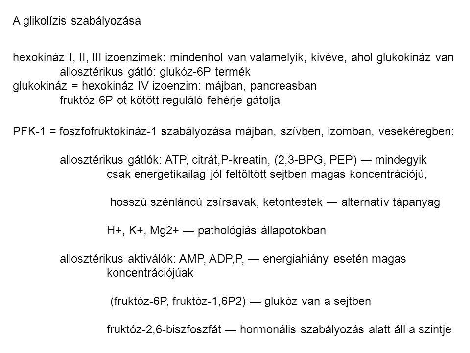 A glikolízis szabályozása hexokináz I, II, III izoenzimek: mindenhol van valamelyik, kivéve, ahol glukokináz van allosztérikus gátló: glukóz-6P termék