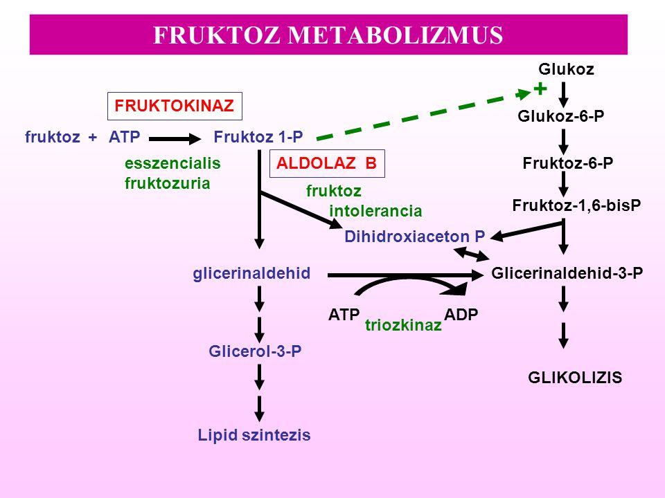 FRUKTOZ METABOLIZMUS glicerinaldehid Dihidroxiaceton P fruktoz FRUKTOKINAZ ALDOLAZ B Fruktoz-6-P Fruktoz 1-PATP Fruktoz-1,6-bisP Glicerinaldehid-3-P G