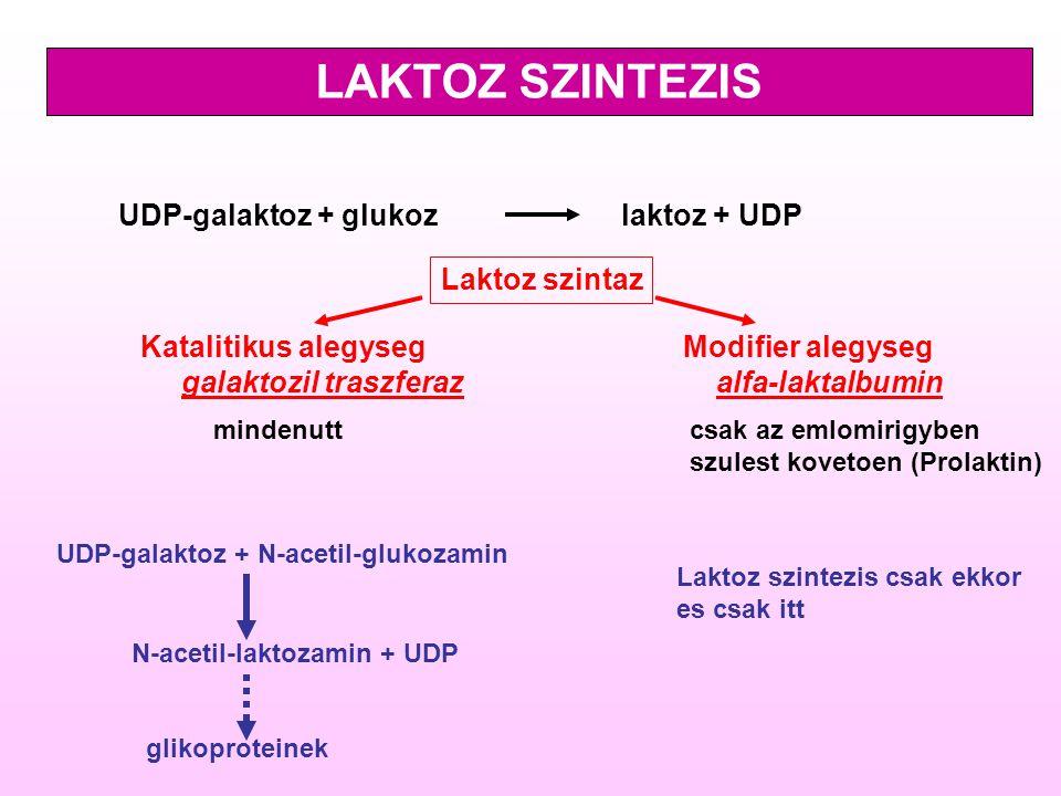 UDP-galaktoz + glukoz laktoz + UDP Laktoz szintaz Modifier alegyseg alfa-laktalbumin Katalitikus alegyseg galaktozil traszferaz mindenuttcsak az emlom