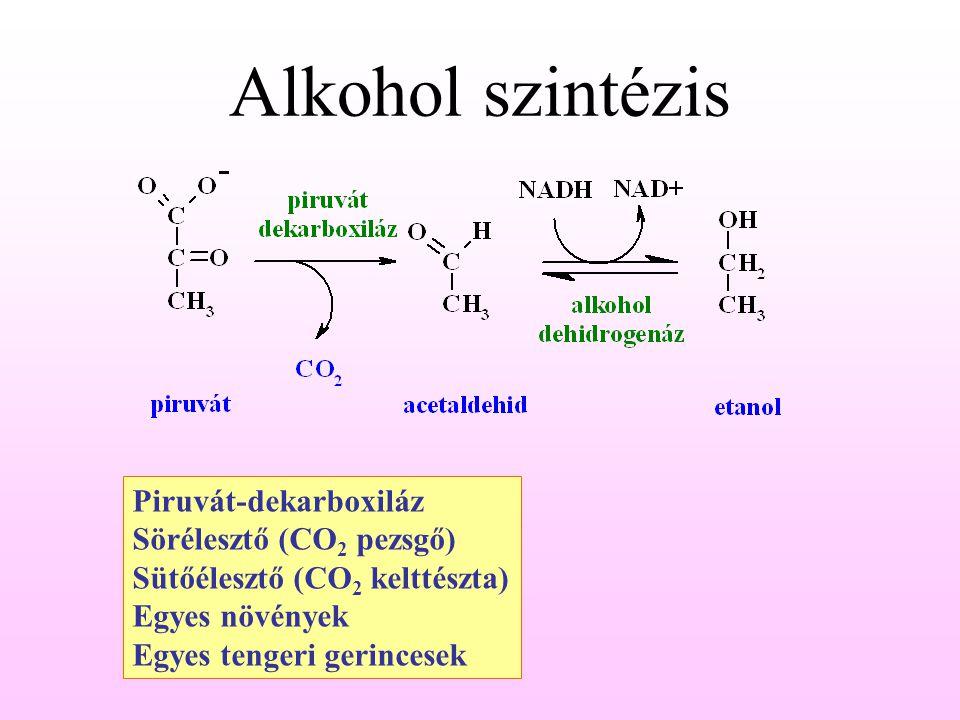 Alkohol szintézis Piruvát-dekarboxiláz Sörélesztő (CO 2 pezsgő) Sütőélesztő (CO 2 kelttészta) Egyes növények Egyes tengeri gerincesek