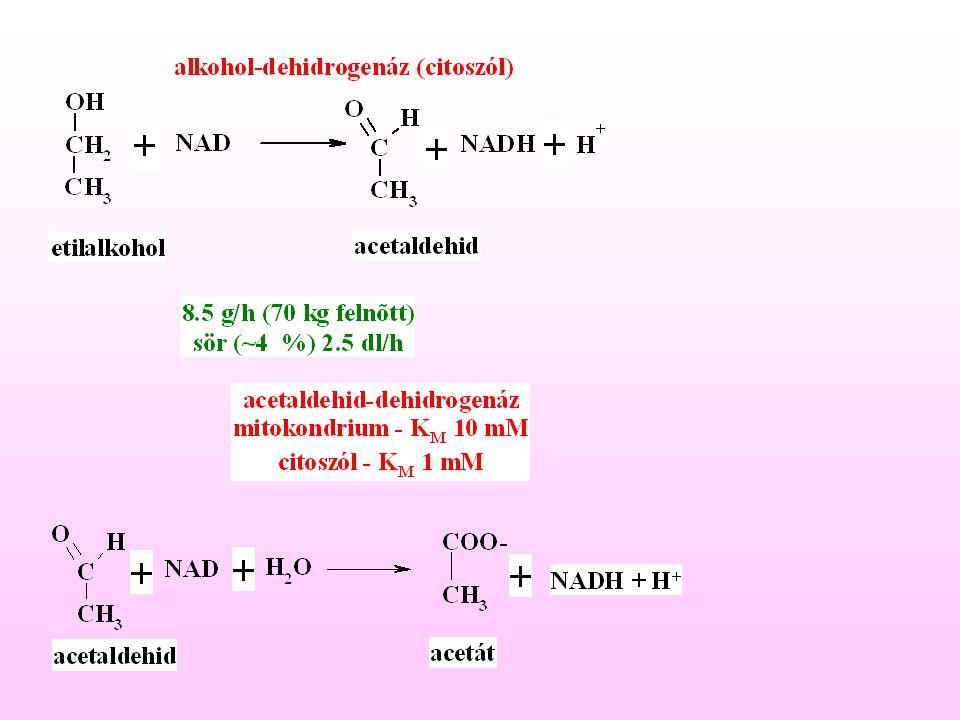 Fokozott alkohol oxidáció Következmény: NADH/NAD + arány nő -Redukált ekvivalensek mitokondriális transzportja (malát – aszpartát, glicerofoszfat shunt) telítődik  NADH citoplazma  NAD +   alkohol további oxidációja  (Acetát  Acetil-KoA az extrahepatikus szervekben)
