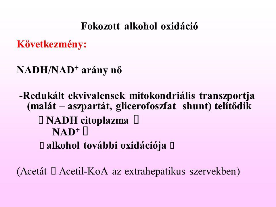 Fokozott alkohol oxidáció Következmény: NADH/NAD + arány nő -Redukált ekvivalensek mitokondriális transzportja (malát – aszpartát, glicerofoszfat shun