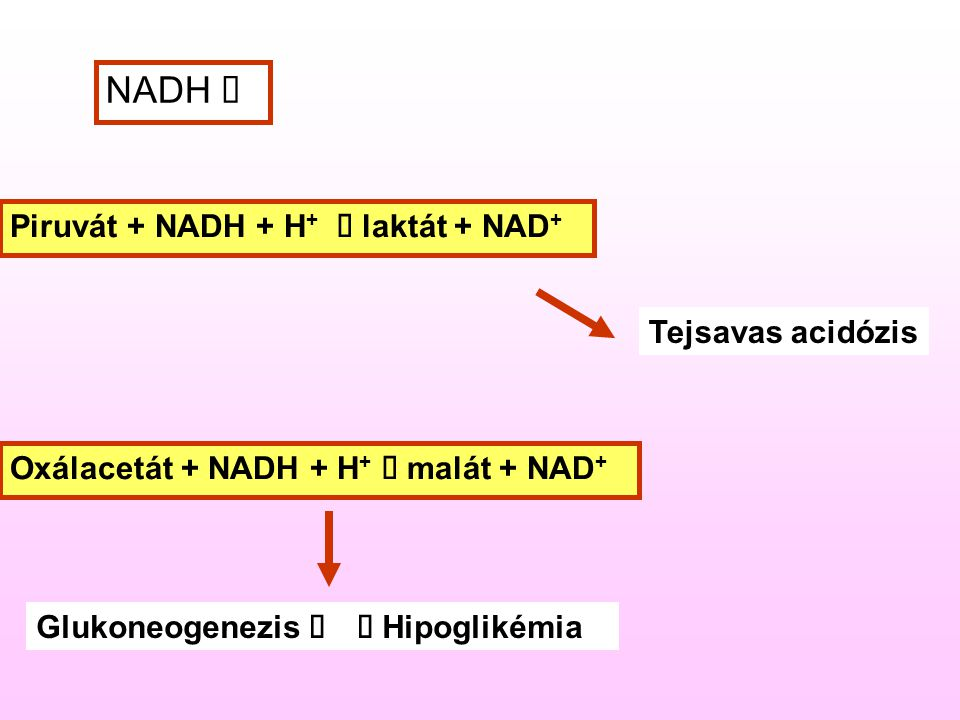 NADH  Piruvát + NADH + H +  laktát + NAD + Oxálacetát + NADH + H +  malát + NAD + Tejsavas acidózis Glukoneogenezis  Hipoglikémia