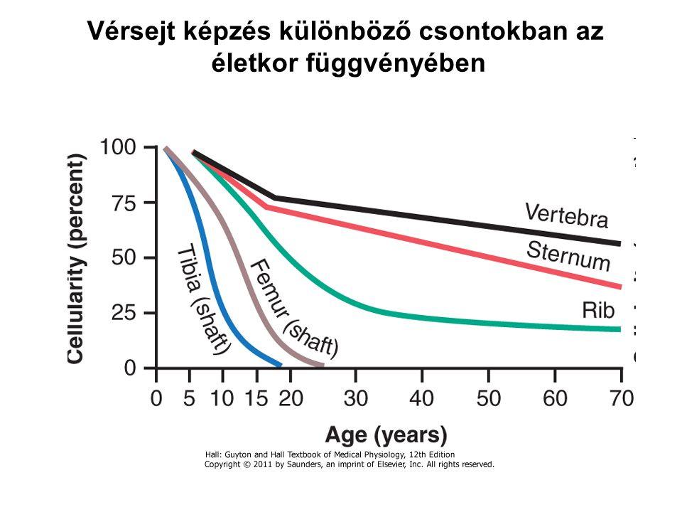 Vérsejt képzés különböző csontokban az életkor függvényében