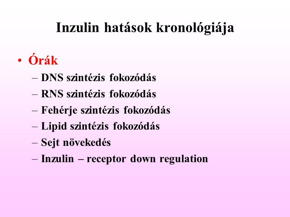 Órák –DNS szintézis fokozódás –RNS szintézis fokozódás –Fehérje szintézis fokozódás –Lipid szintézis fokozódás –Sejt növekedés –Inzulin – receptor dow
