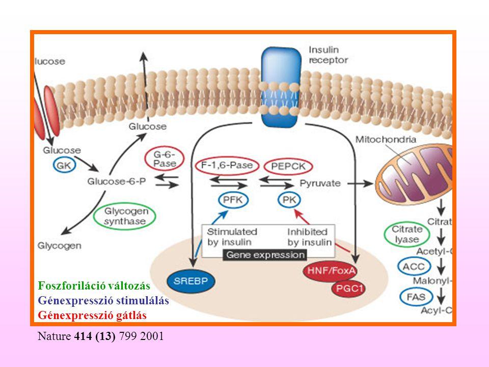 Nature 414 (13) 799 2001 Foszforiláció változás Génexpresszió stimulálás Génexpresszió gátlás