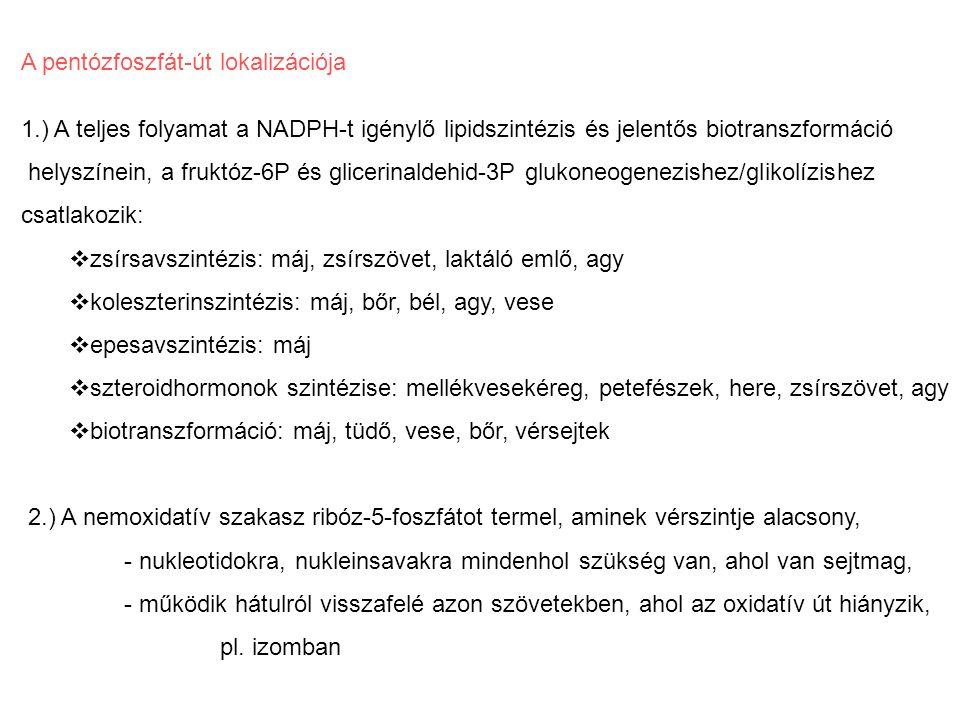 A pentózfoszfát-út oxidatív szakaszának szabályozása vagyis az egész ciklus regulációja a.) NADPH, a dehidrogenázok koenzim terméke gátol, ha felhalmozódik, nincs rá szükség b.) NADP, a dehidrogenázok koenzim szubsztrátja serkent, a NADPH másik folyamatban visszaoxidálódott c.) inzulin jóllakott állapotban indukálja a zsírszövet pentózfoszfát-út dehidrogenázait, kell a NADPH a zsírsavszintézishez, amiből triglicerid fog keletkezni d.) májban, biotranszformáció egyéb helyein a biotranszformációs enzimeket indukáló molekulák indukálják a PPP dehidrogenázait is a NADPH-igény fedezésére, az enzimek mRNS-ének transzkripciója fokozódik, több fehérje keletkezik.
