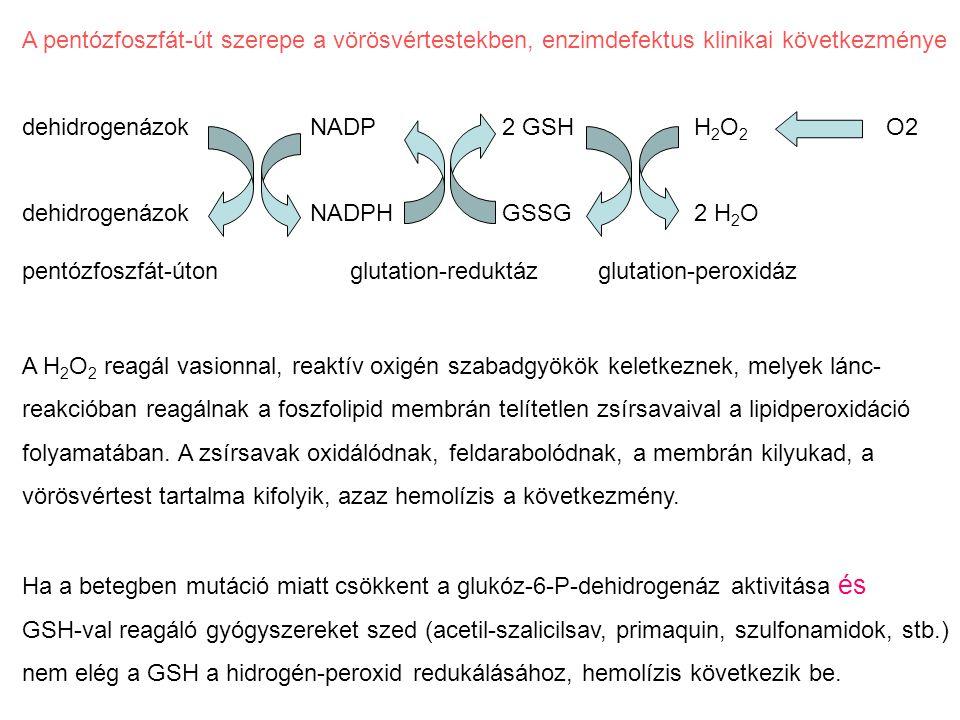 A pentózfoszfát-út szerepe a vörösvértestekben, enzimdefektus klinikai következménye dehidrogenázokNADP2 GSHH 2 O 2 O2 dehidrogenázokNADPHGSSG2 H 2 O