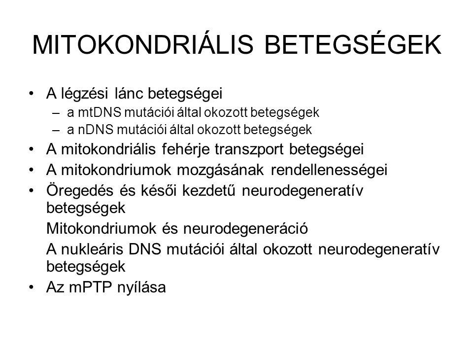 MITOKONDRIÁLIS BETEGSÉGEK A légzési lánc betegségei –a mtDNS mutációi által okozott betegségek –a nDNS mutációi által okozott betegségek A mitokondriá