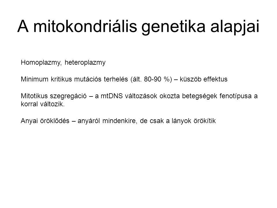 A mitokondriális genetika alapjai Homoplazmy, heteroplazmy Minimum kritikus mutációs terhelés (ált. 80-90 %) – küszöb effektus Mitotikus szegregáció –