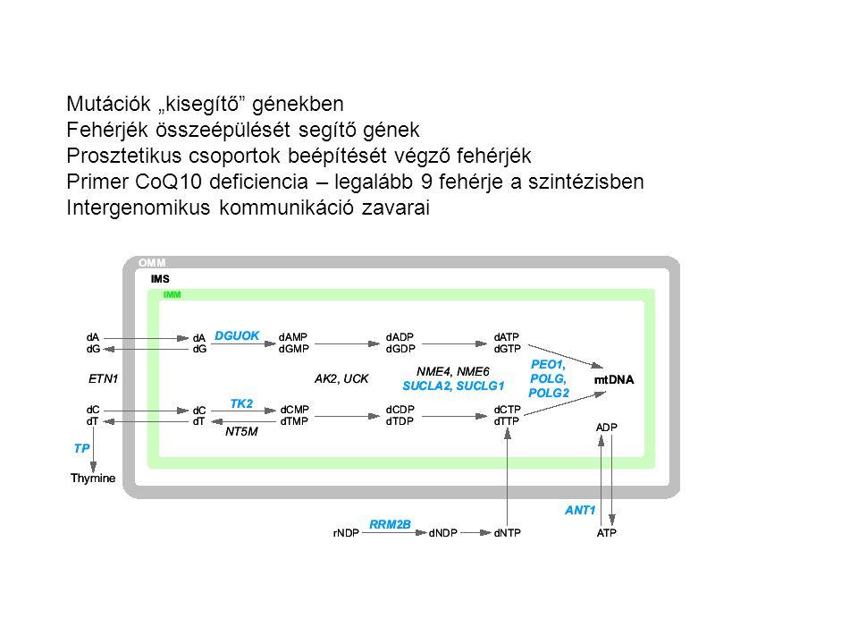 """Mutációk """"kisegítő"""" génekben Fehérjék összeépülését segítő gének Prosztetikus csoportok beépítését végző fehérjék Primer CoQ10 deficiencia – legalább"""