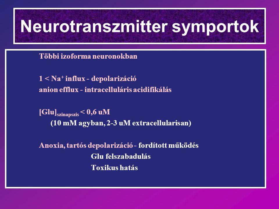 Többi izoforma neuronokban 1 < Na + influx - depolarizáció anion efflux - intracelluláris acidifikálás [Glu] szinapszis < 0,6 uM (10 mM agyban, 2-3 uM