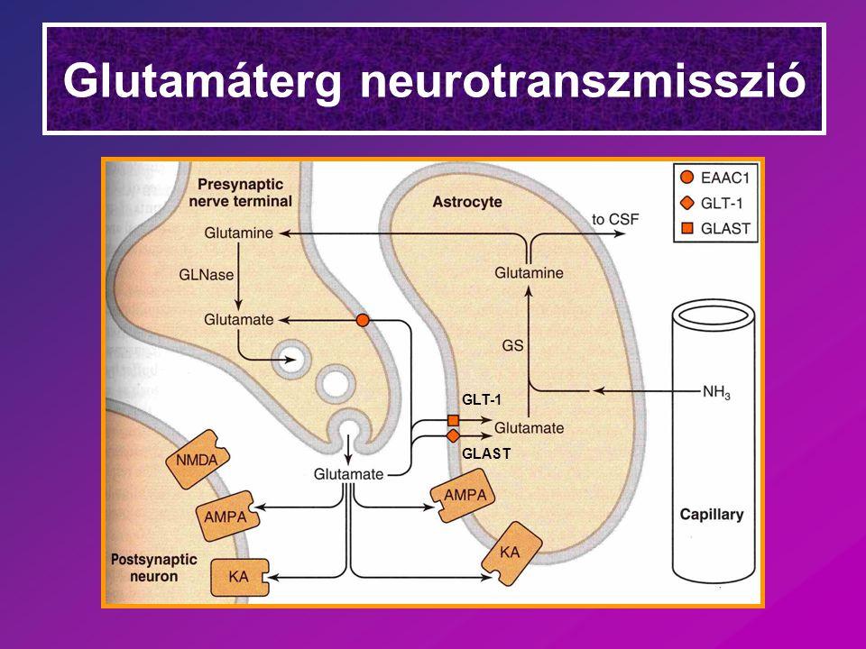 A szinaptikus AMPA & NMDA receptorok