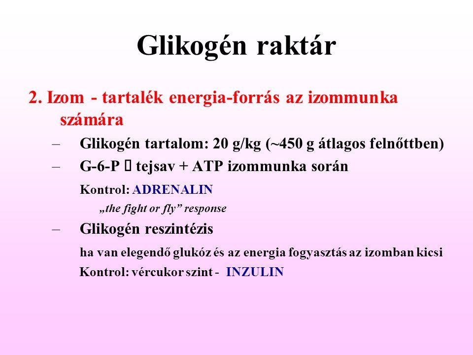 Glikogén raktár 2.