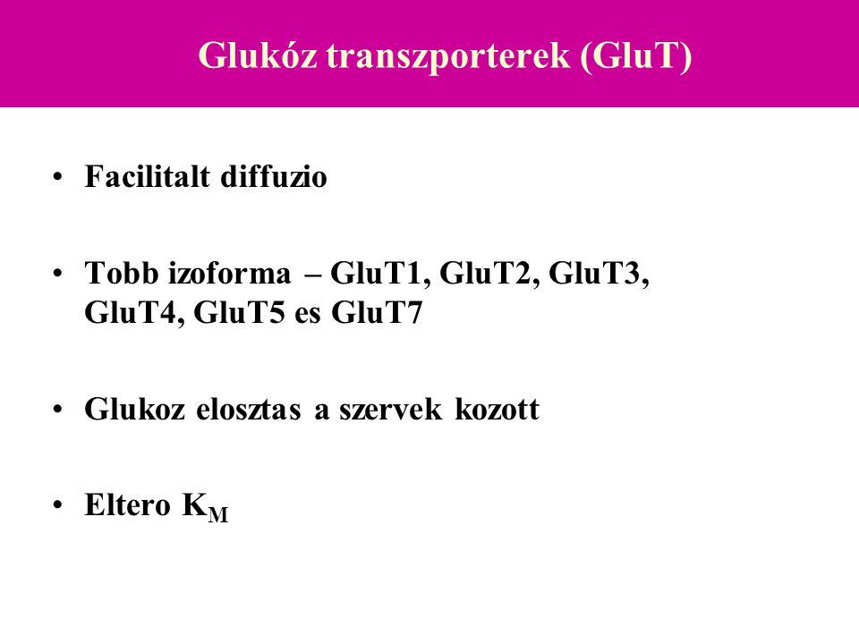 Glukóz transzporterek (GluT) Facilitalt diffuzio Tobb izoforma – GluT1, GluT2, GluT3, GluT4, GluT5 es GluT7 Glukoz elosztas a szervek kozott Eltero K M