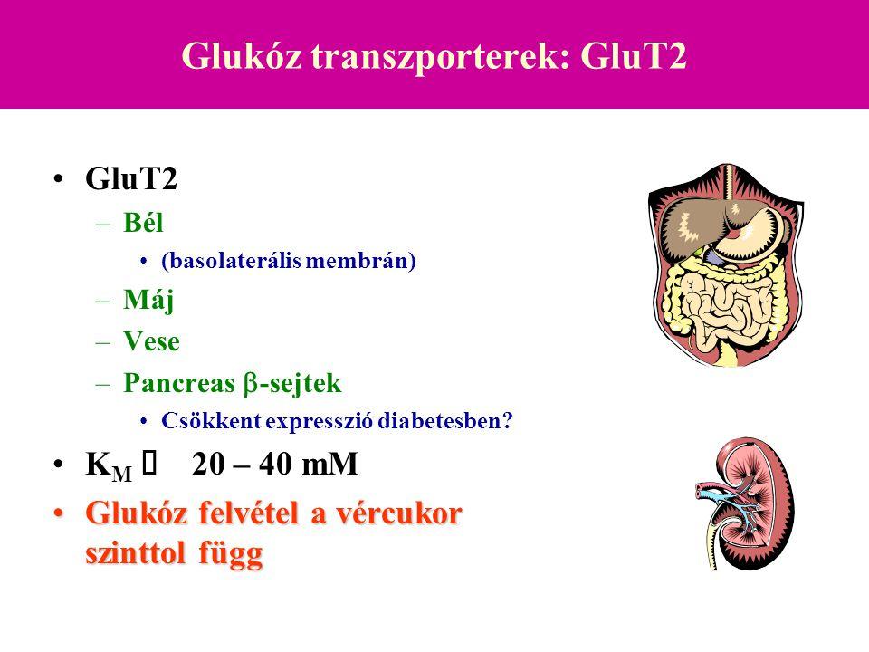 Glukóz transzporterek: GluT3 GluT3 –Agy (idegsejtek) –Placenta K M  1 – 5 mM