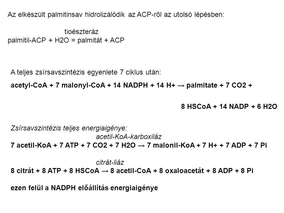 A teljes zsírsavszintézis egyenlete 7 ciklus után: acetyl-CoA + 7 malonyl-CoA + 14 NADPH + 14 H+ → palmitate + 7 CO2 + 8 HSCoA + 14 NADP + 6 H2O Zsírs
