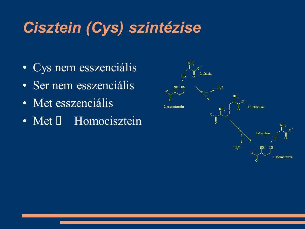 Cisztein (Cys) szintézise Cys nem esszenciális Ser nem esszenciális Met esszenciális Met  Homocisztein