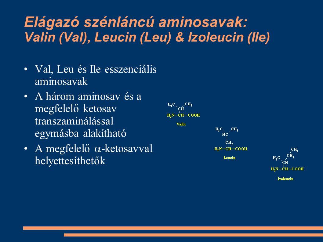 Elágazó szénláncú aminosavak: Valin (Val), Leucin (Leu) & Izoleucin (Ile) Val, Leu és Ile esszenciális aminosavak A három aminosav és a megfelelő keto