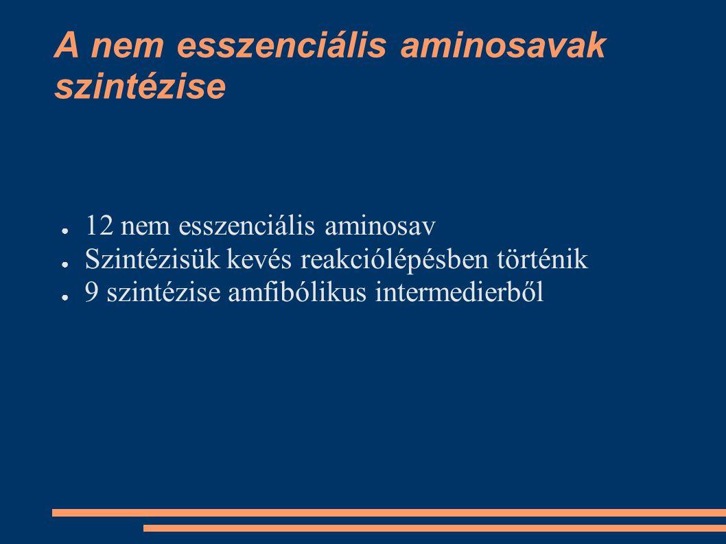 A nem esszenciális aminosavak szintézise ● 12 nem esszenciális aminosav ● Szintézisük kevés reakciólépésben történik ● 9 szintézise amfibólikus interm