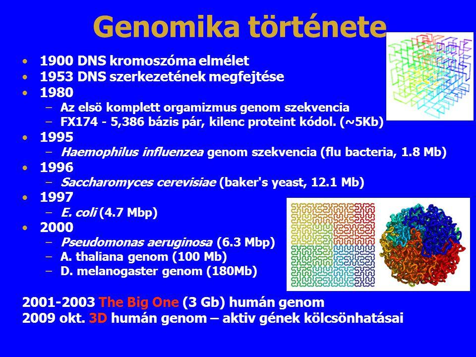Genomika története 1900 DNS kromoszóma elmélet 1953 DNS szerkezetének megfejtése 1980 –Az elsö komplett orgamizmus genom szekvencia –FX174 - 5,386 báz