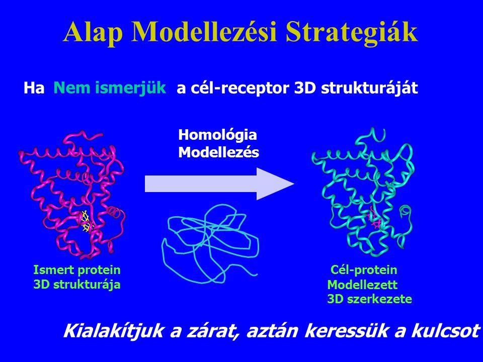 Homológia Modellezés Ismert protein 3D strukturája Cél-protein Modellezett 3D szerkezete Kialakítjuk a zárat, aztán keressük a kulcsot Ha a cél-recept