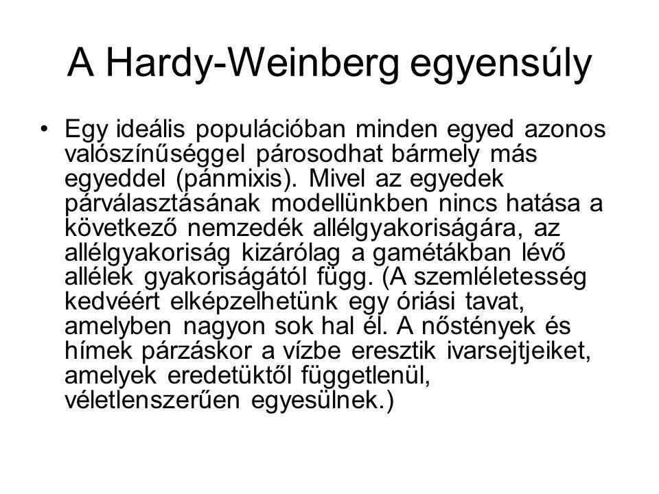 A Hardy-Weinberg egyensúly (folyt.) Vizsgáljuk egyetlen lokusz két alléljának (A és a) gyakoriságát két egymást követő generációban.