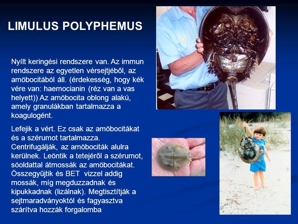 LIMULUS POLYPHEMUS Nyílt keringési rendszere van. Az immun rendszere az egyetlen vérsejtjéből, az amöbocitából áll. (érdekesség, hogy kék vére van: ha