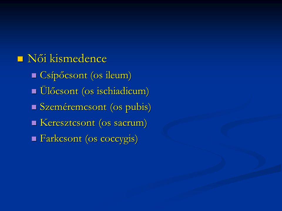 Női kismedence Női kismedence Csípőcsont (os ileum) Csípőcsont (os ileum) Ülőcsont (os ischiadicum) Ülőcsont (os ischiadicum) Szeméremcsont (os pubis) Szeméremcsont (os pubis) Keresztcsont (os sacrum) Keresztcsont (os sacrum) Farkcsont (os coccygis) Farkcsont (os coccygis)